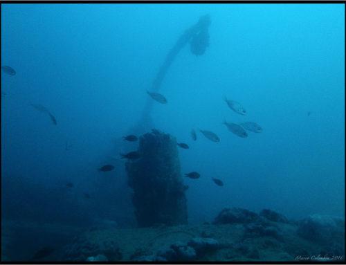 Foto immersione Baron Gautsch