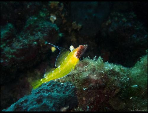 Foto immersione Domenica 3 aprile Rabac